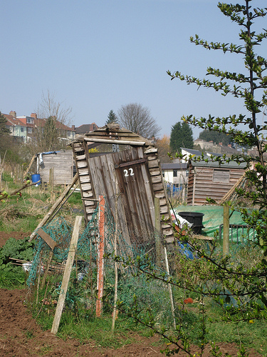 Ramshackle at the Allotments